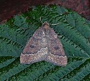 70.282 Early Moth, Theria primaria