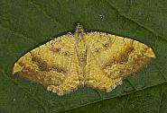 70.059 Yellow Shell, Camptogramma bilineata, Co Louth
