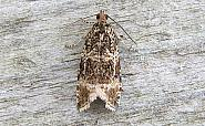 49.166 Celypha lacunana, Co Wexford